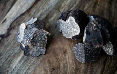 Truffle Degustation Dinner